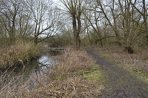 Stanborough Reedmarsh - Stanborough Reedmarsh and the River Lea