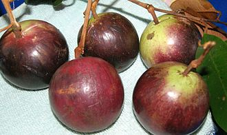 Chrysophyllum cainito - Image: Star Apple (Kaimito)