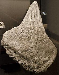 Resultado de imagen de placas stegosaurus