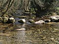 Stepping Stones, River Meavy - geograph.org.uk - 384737.jpg