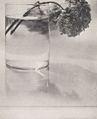 Still Life, Hydrangea 1907 by Adolf de Meyer.jpg