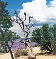 Storm Watcher, Grand Canyon 2004 (26388065944).jpg