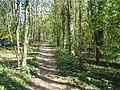 Stretch of shady footpath - round Culverthorpe Lake - geograph.org.uk - 405712.jpg