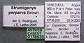 Strumigenys perparva casent0178638 label 1.jpg