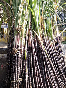 Sugarcane of Chinna SAlem.jpg