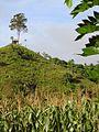 Sulawesi trsr DSCN0881 v1.JPG