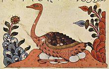 Avestruz-árabe numa ilustração do Livro dos Animais de al-Jahiz, Síria, século XIV