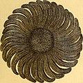 Tableau encyclopédique et méthodique des trois règnes de la nature (1791) (14581663347).jpg