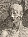 Tabulae sceleti et musculorum corporis humani Wellcome L0063688.jpg