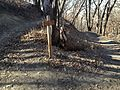 Talbot Road Trail Cutoff to Broken Bow - panoramio.jpg