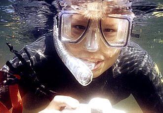 Diving mask - Snorkeler wearing a clear silicone diving mask