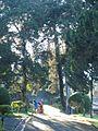 Tawangmangu 2009 Bennylin 036.jpg