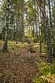 Tenholan linnavuori, Hattula, Finland (48935072977).jpg