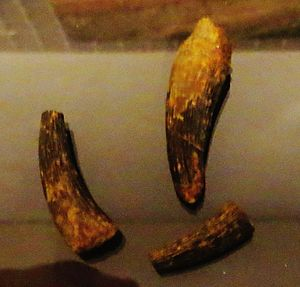 Termatosaurus - Teeth of T. albertii