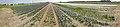 Texel - De Naal - Rommelpot - Panorama Flowerfield Viewing from NNE to South.jpg