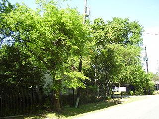 The Rainard School Independent school in Houston, TX, USA