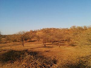 Kathiawar-Gir dry deciduous forests - Arid landscape in the Kathiawar-Gir dry deciduous forests
