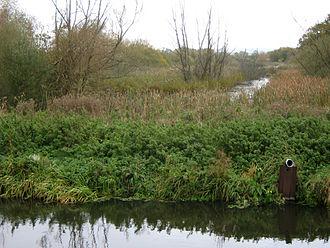 Glastonbury Canal - The canal on Meare Heath