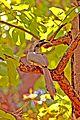 The Grey Hornbill.jpg