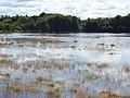 The Loddon floodplain, Woodley - geograph.org.uk - 504342.jpg