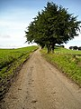 The Road to Carrot - geograph.org.uk - 979407.jpg