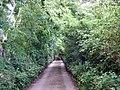 The lane to the White House - Lon Ty Gwyn - geograph.org.uk - 886174.jpg