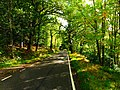 Through The Magic Forest - panoramio.jpg