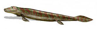 2006 in paleontology - Tiktaalik roseae