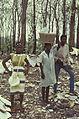 Togo-benin 1985-082 hg.jpg