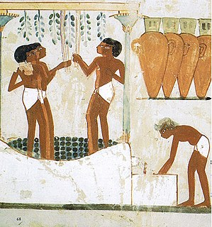 Fermentation in food processing - Grapes being trodden to extract the juice and made into wine in storage jars. Tomb of Nakht, 18th dynasty, Thebes, Ancient Egypt