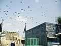 Tomb of Shah Yousuf Gardezi Flying Pigeons 02.jpg