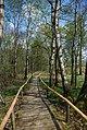 Torfgrube - Hochmoor - geo.hlipp.de - 7539.jpg