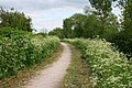 Towpath, Grantham Canal - geograph.org.uk - 826362.jpg