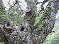 Træ.JPG