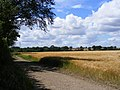 Track from Little Offley to Telegraph Hill - geograph.org.uk - 519476.jpg