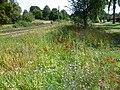 Trackside flowers on Tramlink alongside Coombe Road (geograph 2527712).jpg