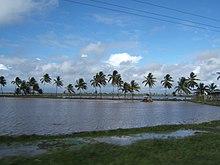 Guyana Wikipedia - Where is guyana