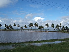 Tractor in a rice field on Guyana's coastal plain.