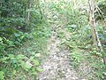 Trail of Mount Katsuu 2018 03.jpg
