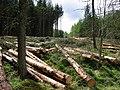 Tree harvesting, Dallaschyle. - geograph.org.uk - 6492.jpg