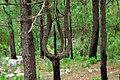 Tree in Neelum Valley jungle.jpg