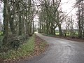 Tree lined driveway - geograph.org.uk - 699582.jpg