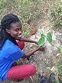 Tree planting 06.jpg