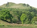 Trees and hills above Machynlleth - geograph.org.uk - 1402359.jpg