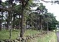 Trees at Lochliboside Hills - geograph.org.uk - 200011.jpg