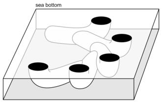 Treptichnus pedum - Burrows viewed obliquely