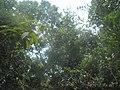 Tropska prašuma u Kepu.jpg