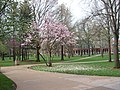 Truman quad spring.jpg