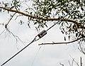 Tuaran Sabah RTM-Antenna-Farm-02.jpg