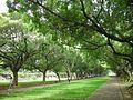 Tunghai University - panoramio.jpg